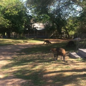 About Southern Cross Wildlife Care clinic